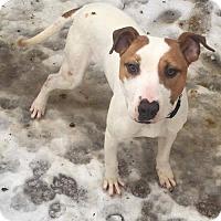 Adopt A Pet :: Cooper 10 Month old Puppy - Rowayton, CT