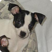Adopt A Pet :: Noelle - Arkadelphia, AR