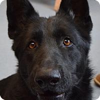 Adopt A Pet :: Delilah - Bay Shore, NY