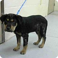 Adopt A Pet :: A283581 - Conroe, TX