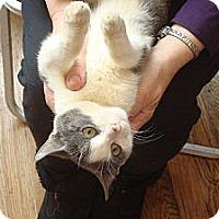 Adopt A Pet :: Tyler - Brooklyn, NY
