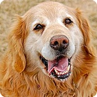 Adopt A Pet :: Goldie - Meridian, ID
