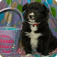 Adopt A Pet :: Brisk - Saskatoon, SK