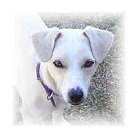 Adopt A Pet :: DOLLY - Phoenix, AZ