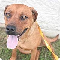 Adopt A Pet :: Nala - Stilwell, OK