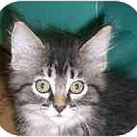 Adopt A Pet :: Valaam - Lombard, IL