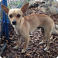 Adopt A Pet :: Norman - Davie, FL