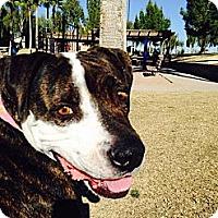 Adopt A Pet :: Shyla - Scottsdale, AZ