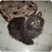 Adopt A Pet :: Sebastian - Courtesy Post - Owensboro, KY