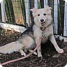 Adopt A Pet :: Vera-DOG'S DOG