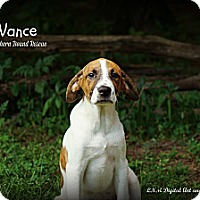 Adopt A Pet :: Vance - Southington, CT