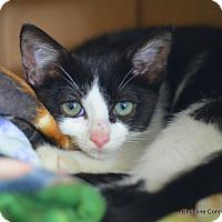 Adopt A Pet :: Snookie - Island Park, NY