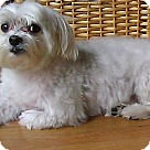 Adopt A Pet :: Romeo