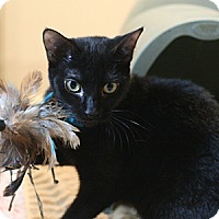 Adopt A Pet :: Sadie - Columbia, MD