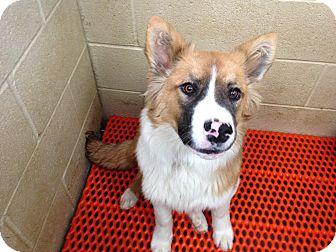 Almost Home Dog Rescue Boston Ma