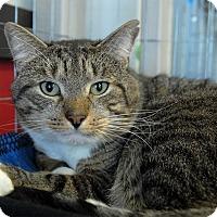 Adopt A Pet :: Finley - Winchendon, MA