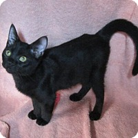 Adopt A Pet :: Sabrina - Seminole, FL