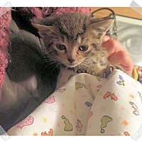 Adopt A Pet :: Buttercup - Olmsted Falls, OH