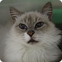 Adopt A Pet :: Elvira - Elyria, OH