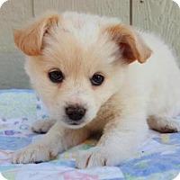 Adopt A Pet :: Ente - Manhattan, NY