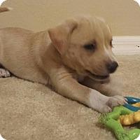 Adopt A Pet :: Jack - Windermere, FL