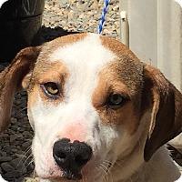 Adopt A Pet :: Ivory! - Sacramento, CA