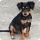 Adopt A Pet :: Dante