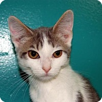 Adopt A Pet :: Kitten ID# 1807 - Lake City, MI