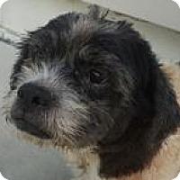 Adopt A Pet :: Rigby - Willingboro, NJ