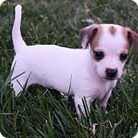 Adopt A Pet :: Adriana Lima - Sacramento, CA