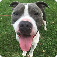 Adopt A Pet :: Jake (AKA Sammie) - Lexington, MO