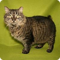 Adopt A Pet :: annie - Bradenton, FL