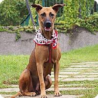Adopt A Pet :: Coco - Castro Valley, CA
