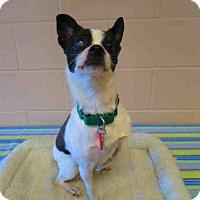 Adopt A Pet :: LEELA - Springfield, MA