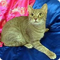 Adopt A Pet :: Lucia - St. Louis, MO