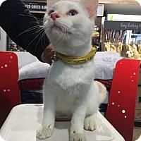 Adopt A Pet :: Chris - Warren, MI