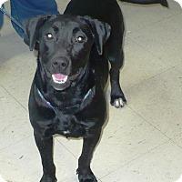 Adopt A Pet :: Bessie - Eastpoint, FL