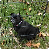 Adopt A Pet :: MABEL - WOODSFIELD, OH