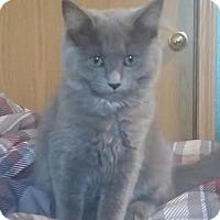 Adopt A Pet :: Rose - Battle Ground, WA