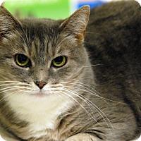 Adopt A Pet :: Kitt - Newland, NC