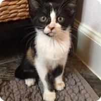 Adopt A Pet :: Hallie - Santa Fe, TX