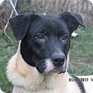 Adopt A Pet :: Wagner