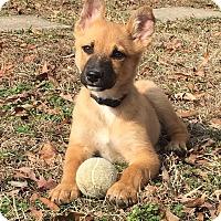 Adopt A Pet :: Kurt - Albany, NY