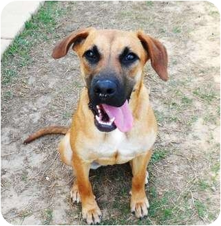 Hound (Unknown Type) Mix Dog for adoption in Meridian, Mississippi - Missy