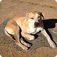Adopt A Pet :: Julius - Orange Cove, CA