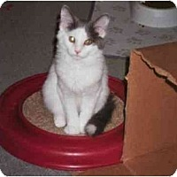 Adopt A Pet :: Bouncing Benny - cincinnati, OH