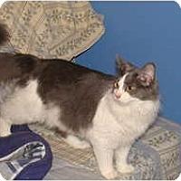Adopt A Pet :: Coco - Spotsylvania, VA