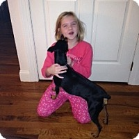 Adopt A Pet :: Kiki - Malaga, NJ