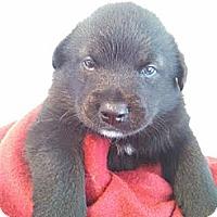 Adopt A Pet :: Michael - Elkhart, IN