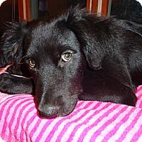 Adopt A Pet :: Rita - Warrenton, NC